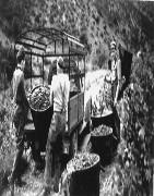 Les Vignerons de Caramany
